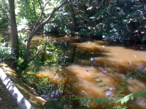 The muddy brown waters of the Blackstone Canal.
