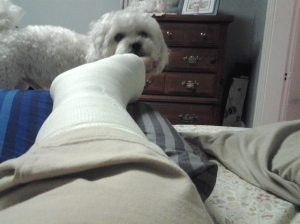 My dog checking out the new and improved cast.