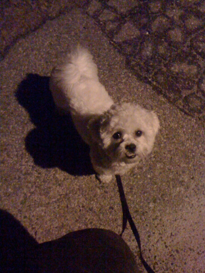 Jasper Out for an Evening Stroll
